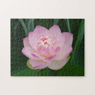 USA, Kansas, Pink Water Lilly Jigsaw Puzzle