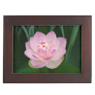 USA, Kansas, Pink Water Lilly Keepsake Box