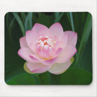 USA, Kansas, Pink Water Lilly Mouse Mat