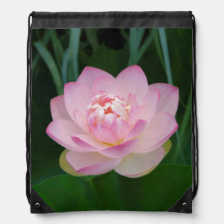 USA, Kansas, Pink Water Lilly Backpack