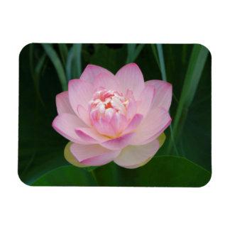 USA, Kansas, Pink Water Lilly Flexible Magnet