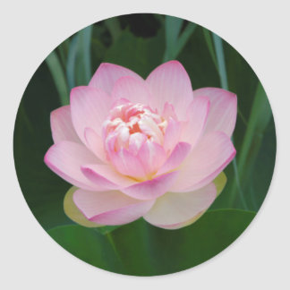 USA, Kansas, Pink Water Lilly Round Sticker