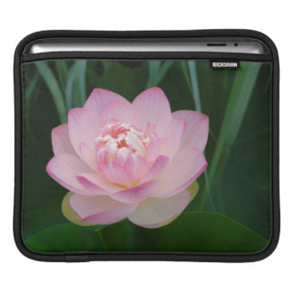 USA, Kansas, Pink Water Lilly Sleeves For iPads