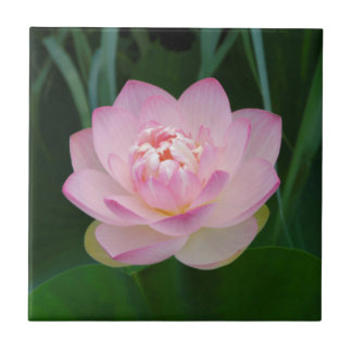 USA, Kansas, Pink Water Lilly Small Square Tile