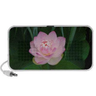 USA, Kansas, Pink Water Lilly Laptop Speakers