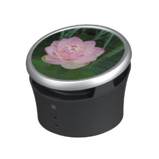 USA, Kansas, Pink Water Lilly Speaker