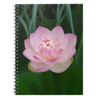 USA, Kansas, Pink Water Lilly Spiral Notebooks