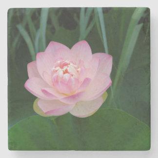 USA, Kansas, Pink Water Lilly Stone Beverage Coaster