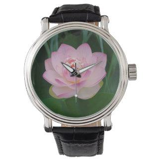 USA, Kansas, Pink Water Lilly Watches