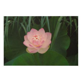 USA, Kansas, Pink Water Lilly Wood Prints