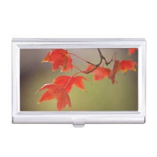 USA, Kansas, Red Leaves In Early Fall Business Card Holder