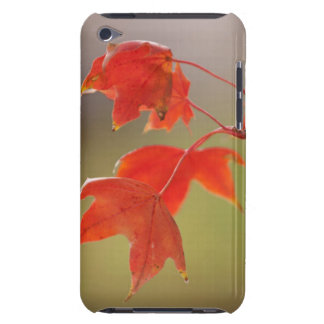 USA, Kansas, Red Leaves In Early Fall Barely There iPod Covers