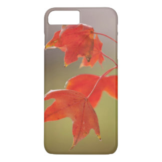 USA, Kansas, Red Leaves In Early Fall iPhone 8 Plus/7 Plus Case