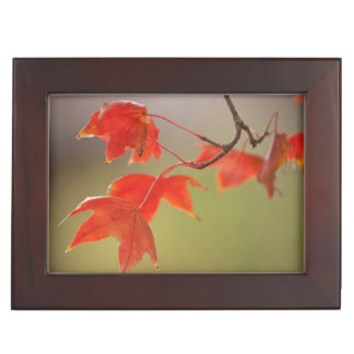 USA, Kansas, Red Leaves In Early Fall Keepsake Box