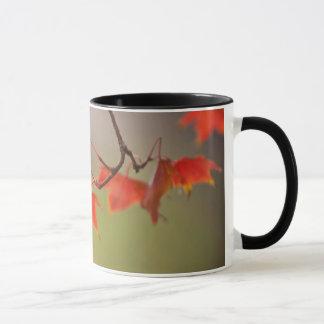 USA, Kansas, Red Leaves In Early Fall Mug