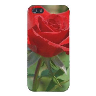USA, Kansas, Red Rose iPhone 5 Case