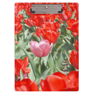 USA, Kansas, Red Tulips With One Pink Tulip Clipboard