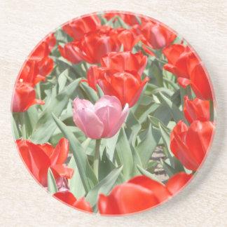 USA, Kansas, Red Tulips With One Pink Tulip Coaster