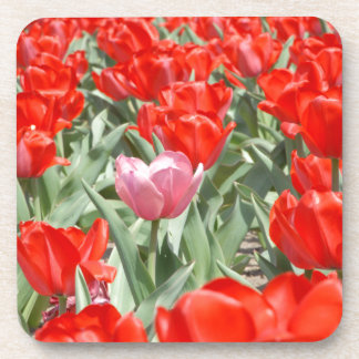 USA, Kansas, Red Tulips With One Pink Tulip Coaster