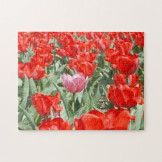 USA, Kansas, Red Tulips With One Pink Tulip Jigsaw Puzzle
