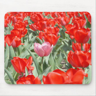 USA, Kansas, Red Tulips With One Pink Tulip Mouse Mat