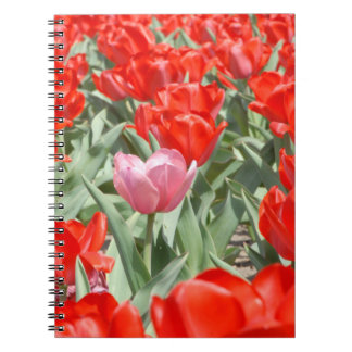 USA, Kansas, Red Tulips With One Pink Tulip Notebook