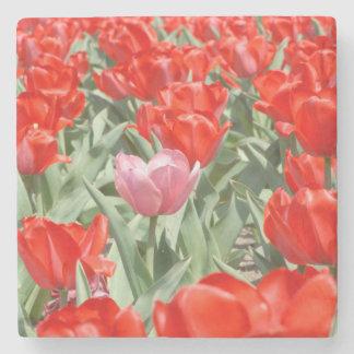 USA, Kansas, Red Tulips With One Pink Tulip Stone Coaster