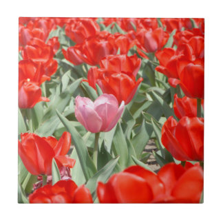 USA, Kansas, Red Tulips With One Pink Tulip Tile