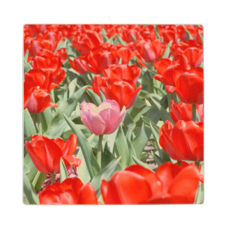 USA, Kansas, Red Tulips With One Pink Tulip Wood Coaster