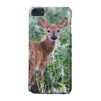 USA, Kansas, Small Whitetail Deer iPod Touch 5G Covers