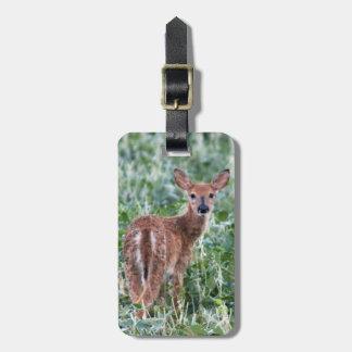 USA, Kansas, Small Whitetail Deer Luggage Tag