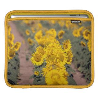 USA, Kansas. Sunflowers (Helianthus Annuus) iPad Sleeve