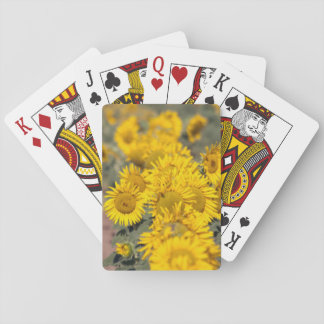 USA, Kansas. Sunflowers (Helianthus Annuus) Playing Cards