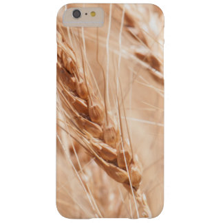 USA, Kansas, Wheat At Harvest Time Barely There iPhone 6 Plus Case