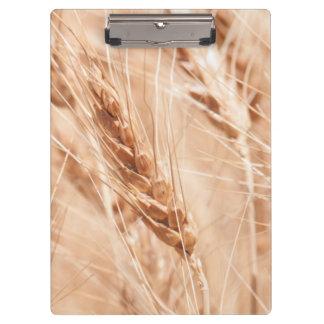 USA, Kansas, Wheat At Harvest Time Clipboard