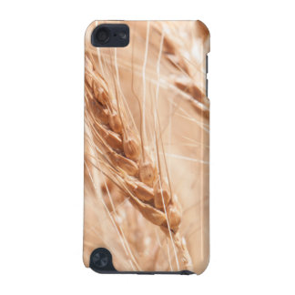 USA, Kansas, Wheat At Harvest Time iPod Touch 5G Case