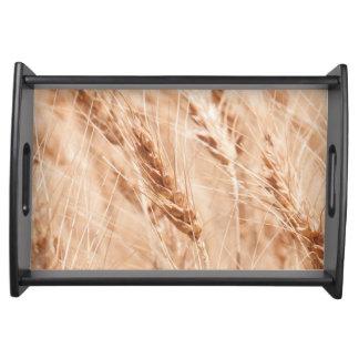 USA, Kansas, Wheat At Harvest Time Serving Tray
