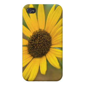 USA, Kansas. Wild Sunflower iPhone 4/4S Cases