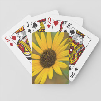 USA, Kansas. Wild Sunflower Playing Cards