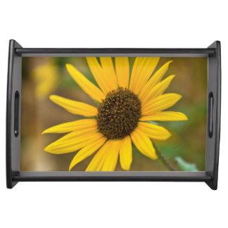 USA, Kansas. Wild Sunflower Serving Tray