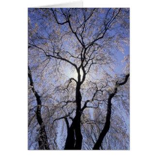 USA, Kentucky, Lexington. Backlit tree and Card