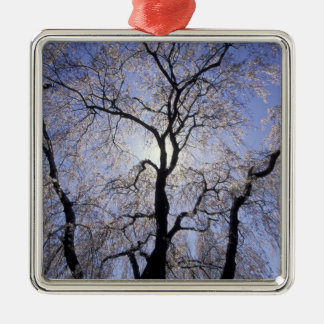 USA, Kentucky, Lexington. Backlit tree and Christmas Ornament