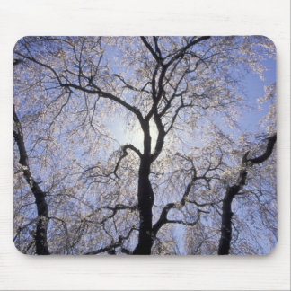 USA, Kentucky, Lexington. Backlit tree and Mouse Pad