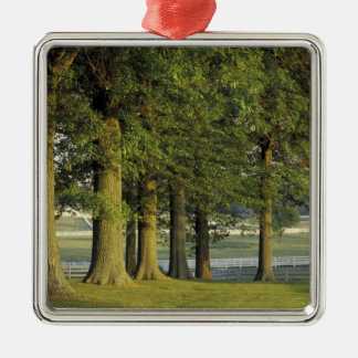 USA, Kentucky, Lexington. Row of trees and Christmas Ornament