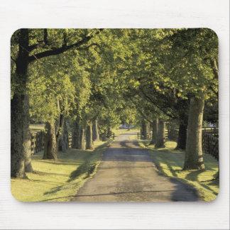 USA, Kentucky, Lexington. Tree-lined driveway, Mouse Mat