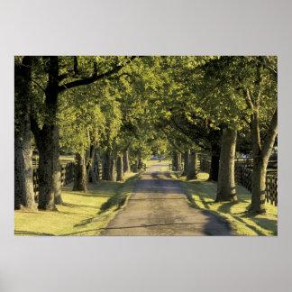 USA, Kentucky, Lexington. Tree-lined driveway, Poster