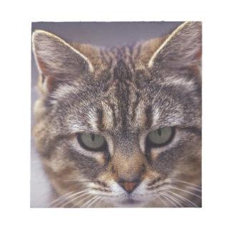 USA, Kentucky, Louisville, Close-up of cat Notepad