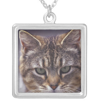 USA, Kentucky, Louisville, Close-up of cat Silver Plated Necklace