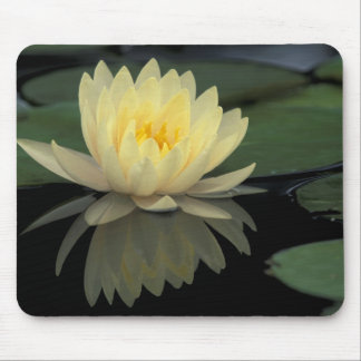 USA, Kentucky, Louisville Domestic water lily, Mouse Pad
