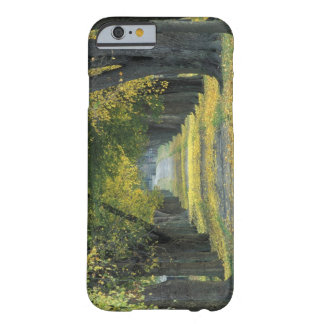 USA, Kentucky, Louisville. Tree-lined road in Barely There iPhone 6 Case
